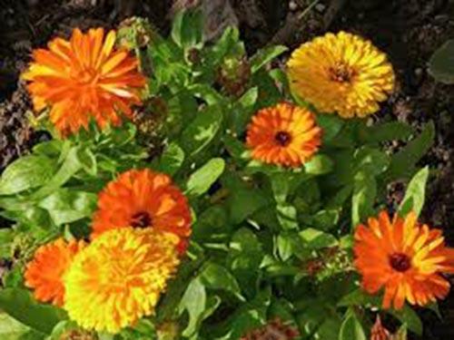 Травы для лечения бесплодия