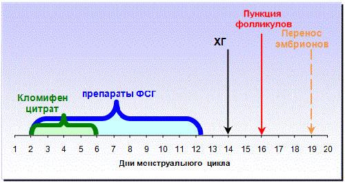 Короткий протокол ЭКО и его характерные свойства