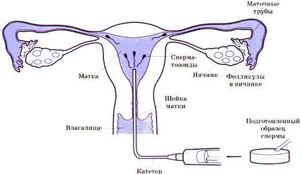 produkti-stimuliruyushie-virabativanie-spermi