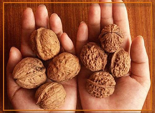 Улучшить качество спермы помогут орехи