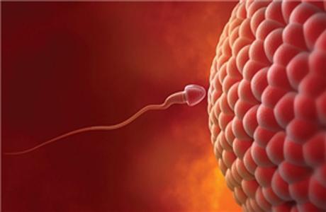 Овуляция и зачатие